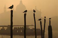 - Venice, boat for public transport and S.Maria of the Health church ....- Venezia, battello per il trasporto pubblico e chiesa di S.Maria della Salute