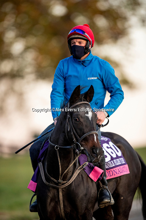 November 3, 2020: Oodnadatta, trained by trainer Mrs. John Harrington, exercises in preparation for the Breeders' Cup Juvenile Fillies Turf at Keeneland Racetrack in Lexington, Kentucky on November 3, 2020. Alex Evers/Eclipse Sportswire/Breeders Cup