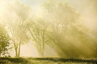 sun rays filtering through the trees on a foggy morning in Arkansas in nature