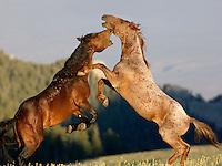 Wild Horses 2013