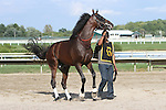 September 1, 2014: Smarty Jones Stakes contender Almost Famous enters the paddock. Protonico, Joe Bravo up, wins the grade 3 Smarty Jones Stakes at Parx Racing in Bensalem, PA. Trainer is Todd Pletcher. Owner is International Equities Holding, Inc. ©Joan Fairman Kanes/ESW/CSM