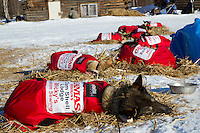 With sponor logos on the coats Wattie McDonald's team reasts in the sun at Shageluk on Saturday during Iditarod 2011