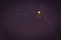 A spider sits patiently in the center of its web waiting for . . .  Dinner.