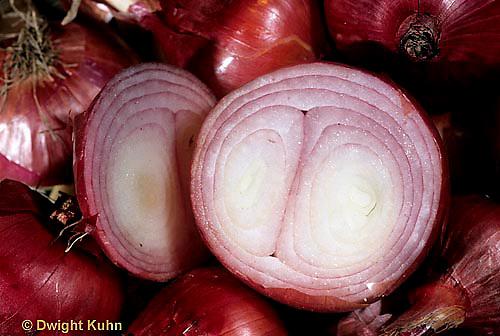 HS16-030a  Onion - red onion cut in half