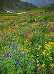 San Juan Mountains, CO<br /> Pink hues of rose paintbrush (Castilleja rhexifolia), delphinium (Delphinium barbeyi) and sunflowers (Senecio crassulus) blooming in an alpine wildflower meadow on Stony Pass