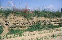 Uferschwalbe, Brutkolonie, Kolonie, Bruthöhlen in einer Steilwand, Ufer-Schwalbe, Riparia riparia, sand martin