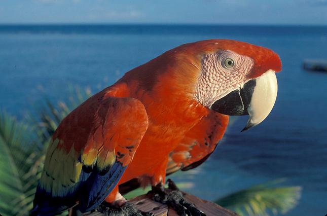 Parrot near ocean