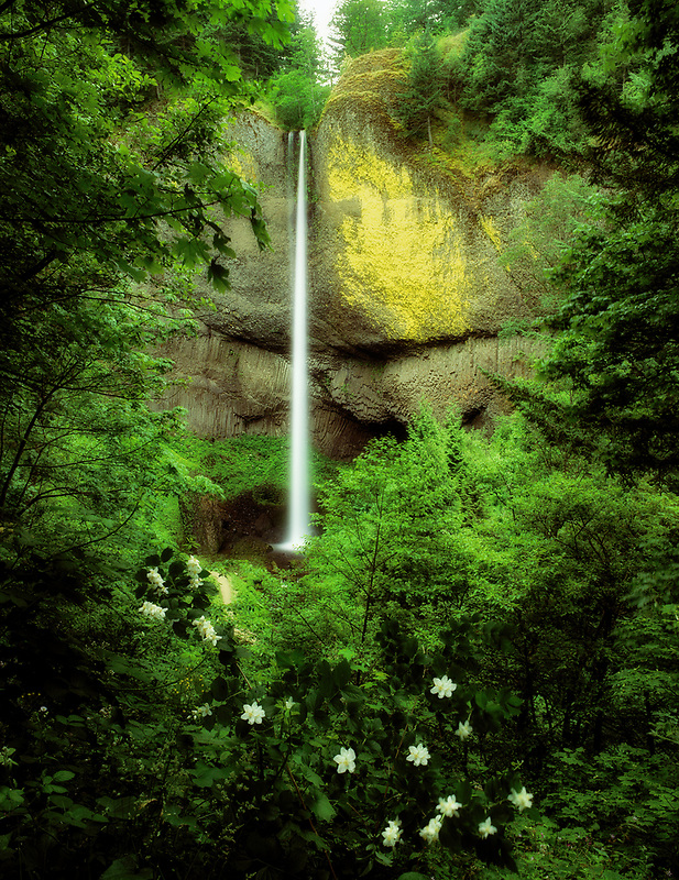 Latourell Falls with spring wildflowers, Oregon.