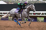 DEL MAR, CA - NOVEMBER 02: Unique Bella, owned by Don Alberto Stable and trained by Jerry Hollendorfer, exercises in preparation for Breeders' Cup Filly & Mare Sprint during morning workouts at Del Mar Thoroughbred Club on November 2, 2017 in Del Mar, California. (Photo by Michael McInally/Eclipse Sportswire/Breeders Cup)