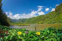 Pololu valley The Big Island of Hawaii, Pacific Ocean