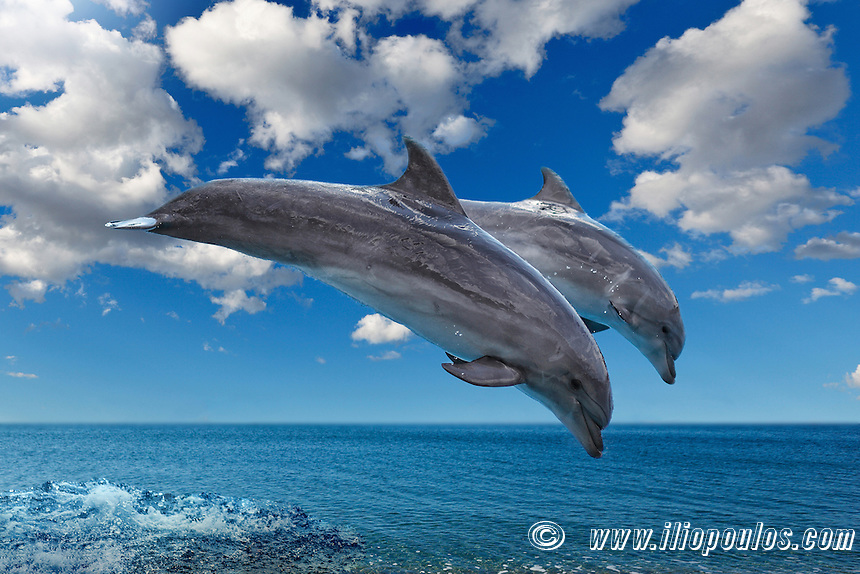 Dolphins jumping in formation on the sea