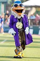 Myrtle Beach Pelicans mascot Splash Pelican before a game against the Potomac Nationals at Ticketreturn.com Field at Pelicans Ballpark on July 19, 2018 in Myrtle Beach, South Carolina. Potomac defeated Myrtle Beach 6-3. (Robert Gurganus/Four Seam Images)