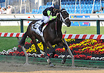 09 May 15: Payton d'Oro and Terry Thompson win the grade 2 Black-Eyed Susan Stakes at Pimlico Race Track in Baltimore, Maryland.