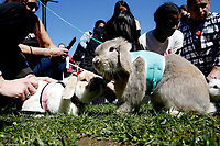 """NEW YORK - NEW YORK - APRIL 03: People hold bunnies during a """"bunny meet up"""" in Washington Square Park on Easter weekend on April 03, 2021 in New York. NYC and most of the United States are planning a year later after pandemic, the celebration of the of Easter which may return with some of normalcy under New York state guidelines. (Photo by John Smith/VIEWpress)"""