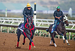 DEL MAR, CA - OCTOBER 27:  Sharp Azteca, trained by Jorge Navarro, has serious equipment trouble as he exercises in preparation for the Breeders' Cup Las Vegas Dirt Mile at Del Mar Thoroughbred Club on October 27, 2017 in Del Mar, California. (Photo by Scott Serio/Eclipse Sportswire/Breeders Cup)