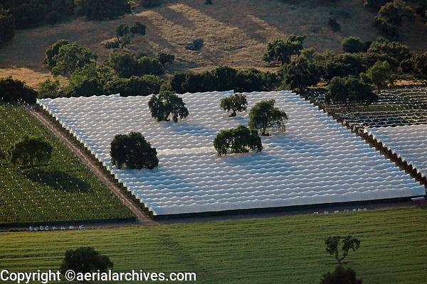aerial photograph of greenhouses in northern Santa Barbara County, California