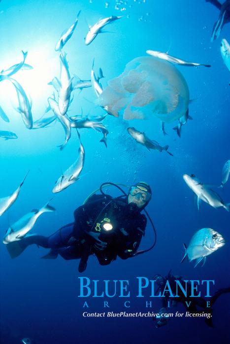 diver, jellyfish and schooling fish, Medas Islands, Spain (Mediterranean)