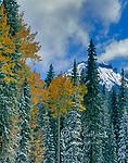 Clearing Storm, Aspen, Cimmaron Ridge, Uncompahgre National Forest, Colorado