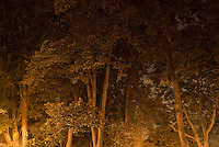 Trees in Riverside Park, on Manhattan's Upper West Side, Illuminated at Night....New York City, New York State, USA