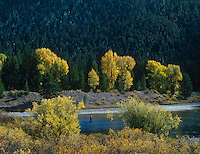 749450265 a lone fisherman works the riffles along the snake river near oxbow bend in grand tetons national park wyoming