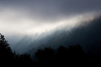 A fine art landscape of dawn light breaking through mist along the Columbia River Gorge in northern Oregon.  The grey tones of the early light spread over forests, creating silhouettes of pine trees in the foreground.