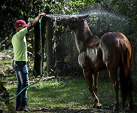 VILLAVICENCIO - COLOMBIA. 13-10-2018: Un caballo recibe un baño durante el 22 encuentro Mundial de Coleo en Villavicencio, Colombia realizado entre el 11 y el 15 de octubre de 2018. / A horse receives a shower during the 22 version of the World  Meeting of Coleo that takes place in Villavicencio, Colombia between 11 to 15 of October, 2018. Photo: VizzorImage / Gabriel Aponte / Staff