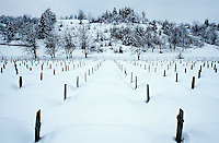 Bosnia and Herzegowina. Republika Serpska. Potocari. Potocari is a small village distant 10 km from the town of Srebrenica. Muslim graveyard. 8000 muslims men were killed on june 1995 by the serbs at the end of the bosnian war. The identity of 1337 dead men is known and they are buried in tombs in the memorial cemetery. © 2005 Didier Ruef