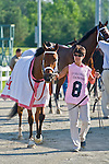 20 June 2009: Battle of Hastings (GB) in the paddock before winning the Colonial Turf Cup (Gr II) stakes race. Battle of Hastings is owned by M. House and trained by J. Mullins.