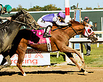 BENSALEM, PENNSYLVANIA - SEPT 23:  Page McKenney #8, ridden by Horacio Karamanos , wins the PA Derby Champion Stakes at  Parx Racing on September 23, 2017 in Bensalem, Pennsylvania ( Photo by Sue Kawczynski/Eclipse Sportswire/Getty Images)