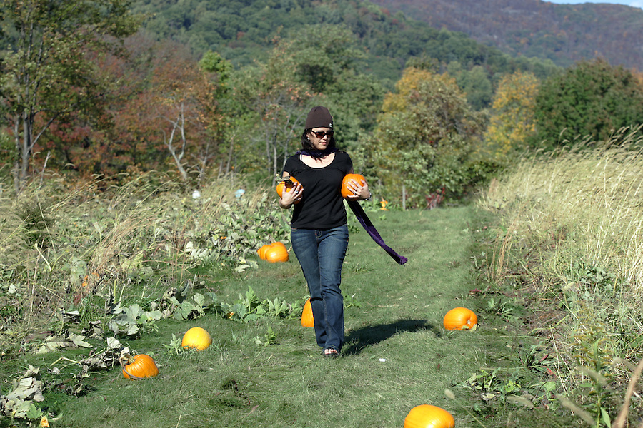 Pumpkin patch Chiles orchard in Albemarle County, VA. Photo/Andrew Shurtleff