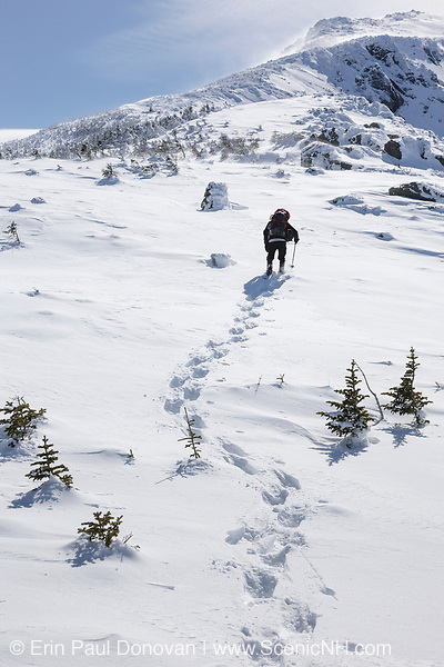 A lone winter hiker ascending the Air Line Trail in extreme weather conditions during the winter months in the White Mountains, New Hampshire.