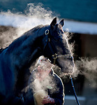 October 29, 2018 : A horse gets a bath after exercising at Churchill Downs on October 29, 2018 in Louisville, Kentucky. Scott Serio/Eclipse Sportswire/CSM