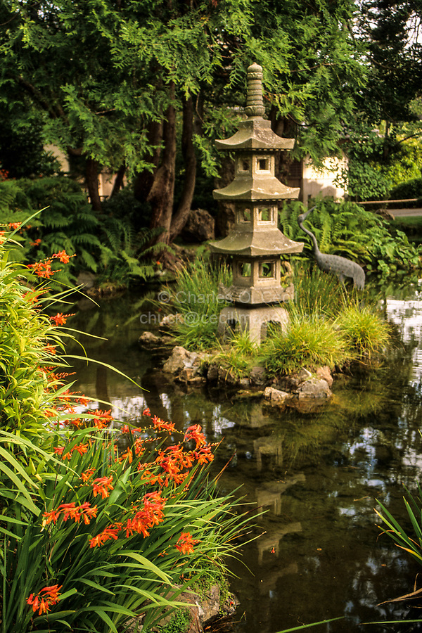 San Francisco, California.   Japanese Tea Garden, Golden Gate Park.