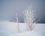 Fog engulfs the snow covered shoreline at Crowley Lake, Eastern Sierra, .Mono County, California