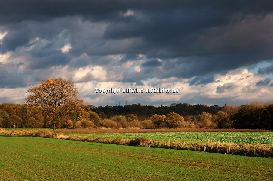 Boberger Niederung: EUROPA, DEUTSCHLAND, HAMBURG, (EUROPE, GERMANY), 09.11.2013 Boberger Niederung, Naturschutzgebiet