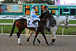 NEW ORLEANS, LA - FEBRUARY 20:<br /> Mo Tom #2, ridden by Corey J Lanerie in the Risen Star Stakes post parade for the Louisiana Derby Preview Race Day at Fairgrounds Race Course on February 20,2016 in New Orleans, Louisiana. (Photo by Steve Dalmado/Eclipse Sportswire/Getty Images)