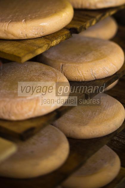 France, Nord (59),Côte d'Opale, Killem:  Affinage du Fromage de Bergues de la Ferme J-B Ronckier //  France, Nord, Opal Coast, Killem: Ripening cheese Bergues Farm JB Ronckier