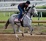 LOUISVILLE, KENTUCKY - MAY 03: Sailor's Valentine, owned by Semaphore Racing LLC and Homewrecker Racing LLC and trained by Eddie Kenneally, exercises in preparation for the Kentucky Oaks at Churchill Downs on May 3, 2017 in Louisville, Kentucky. (Photo by Jon Durr/Eclipse Sportswire/Getty Images)