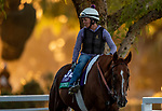 OCT 25: Breeders' Cup Turf entrant United, trained by Richard E. Mandella,  at Santa Anita Park in Arcadia, California on Oct 25, 2019. Evers/Eclipse Sportswire/Breeders' Cup