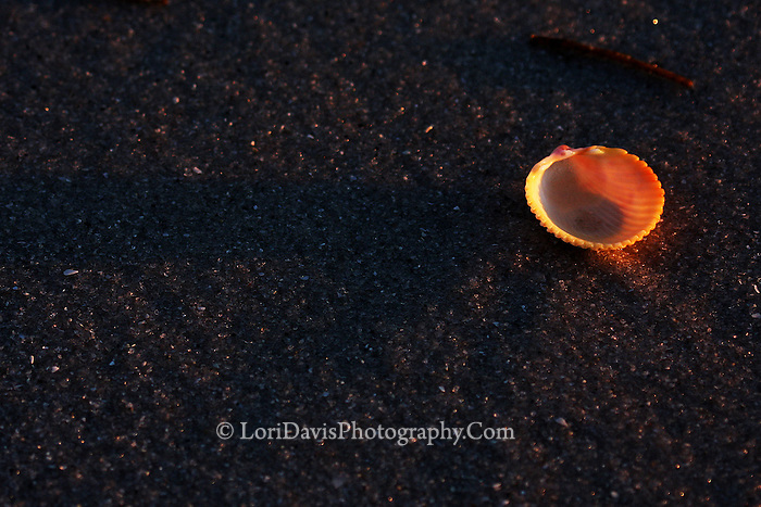 Sunset Through Cockle Shell  #N35