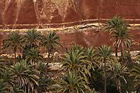 Afrique/Afrique du Nord/Maroc/Env d'Immouzer: Palmeraie dans la Vallée du Bonheur