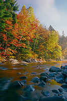 Red maples & eastern white pines<br />   reflect in Swift River<br /> Whhite Mountain National Forest<br /> New Hampshire,  New England