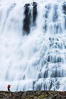 Dynjandi Foss waterfall, Westfjords, Iceland, Europe