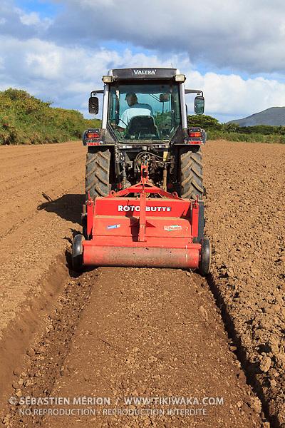 Réalisation des planches de semis de carottes (exploitation de Christophe Courtot), Pouembout