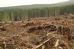 Clear cut logging operation