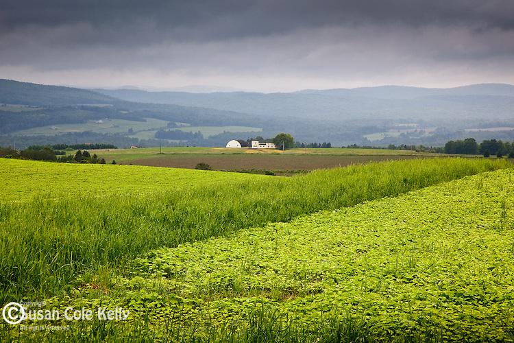 Potato fields in New Canada, Aroostook County, ME, USA