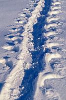 emperor penguin, Aptenodytes forsteri, toboganning tracks, Cape Washington, Antarctica