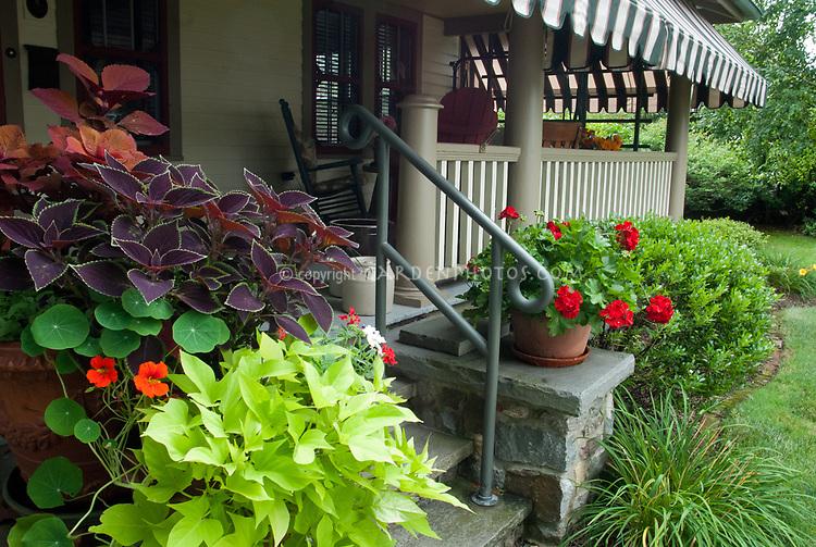 Foliage container planters pots on front porch steps entranceway, Ipomoea sweet potato vine, annual geranium pelargonium, tropaeoleum nasturtiums coleus,verbena, flower and  foliage plants together