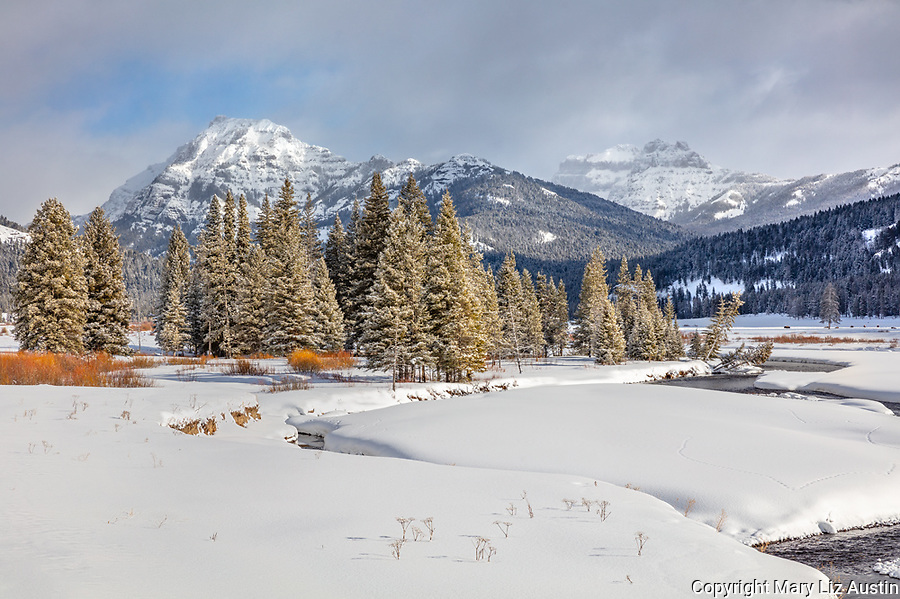Yellowstone National Park, Wyoming: Dusting of snow on pine trees along Soda Butte Creek with the Absaroka Range in the distance at Round Prairie.