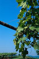 Slowenien, Weinbau im Vipava-Tal